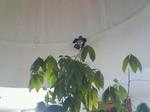 喫茶店2天井